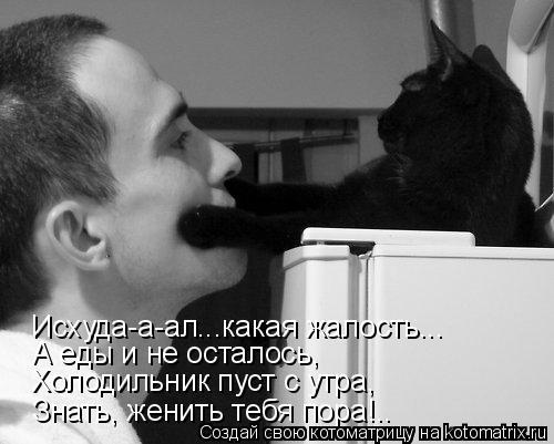 Котоматрица: Холодильник пуст с утра, Знать, женить тебя пора!.. А еды и не осталось, Исхуда-а-ал...какая жалость...