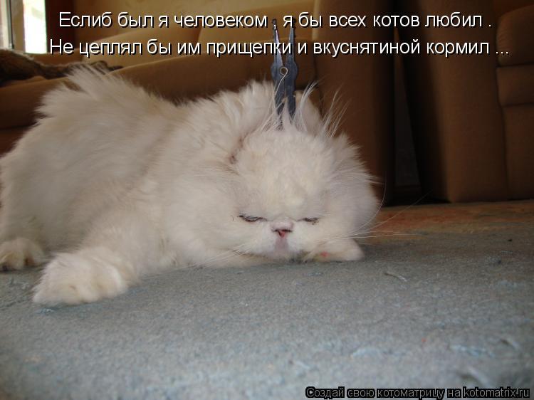 Котоматрица: Еслиб был я человеком , я бы всех котов любил . Не цеплял бы им прищепки и вкуснятиной кормил ...