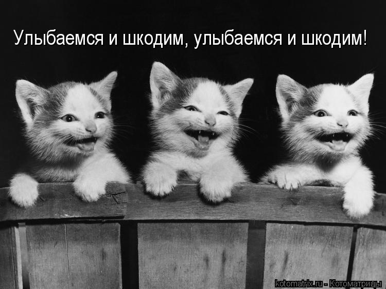 Котоматрица: Улыбаемся и шкодим, улыбаемся и шкодим!