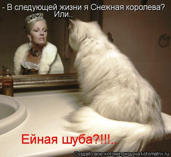 Котоматрица: - В следующей жизни я Снежная королева? Или.. Ейная шуба?!!!..