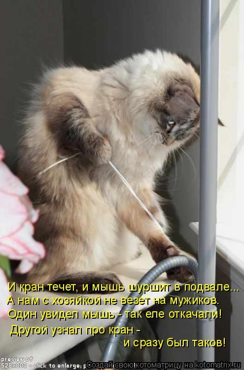 Котоматрица: И кран течет, и мышь шуршит в подвале...  А нам с хозяйкой не везет на мужиков.  Один увидел мышь - так еле откачали!  Другой узнал про кран -   и с