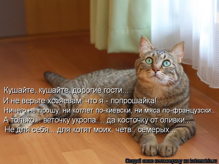 Котоматрица: Кушайте, кушайте, дорогие гости... И не верьте хозяевам, что я - попрошайка! Ничего не прошу: ни котлет по-киевски, ни мяса по-французски.. А тол