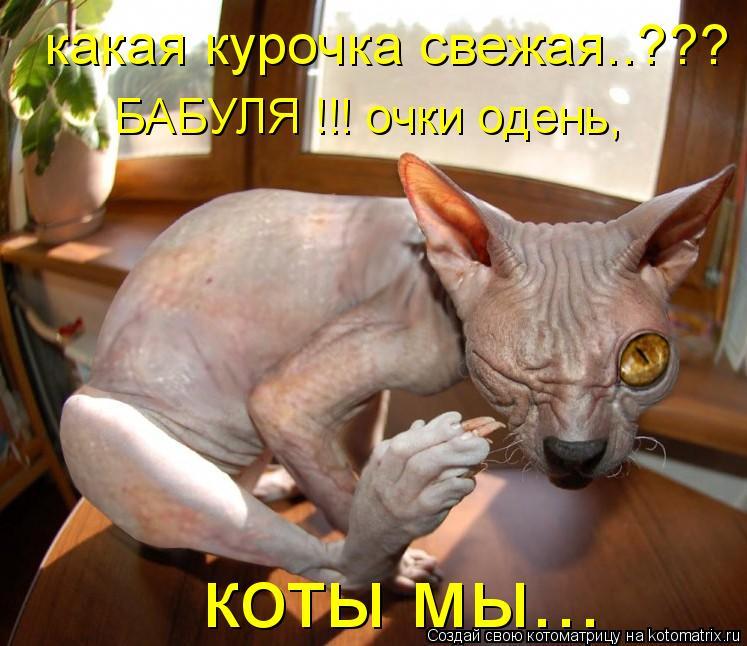 Котоматрица: какая курочка свежая..??? БАБУЛЯ !!! очки одень, коты мы...