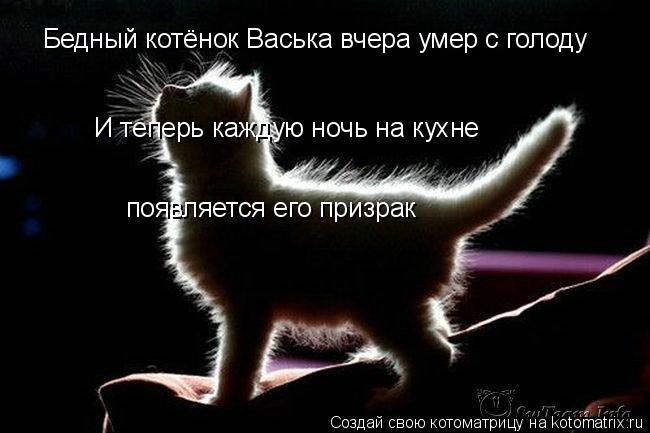Котоматрица: Бедный котёнок Васька вчера умер с голоду  И теперь каждую ночь на кухне  появляется его призрак
