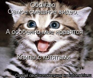 Котоматрица: Обожаю  Самое смешное видео,  А особенно мне нравятся Клипы с котятами