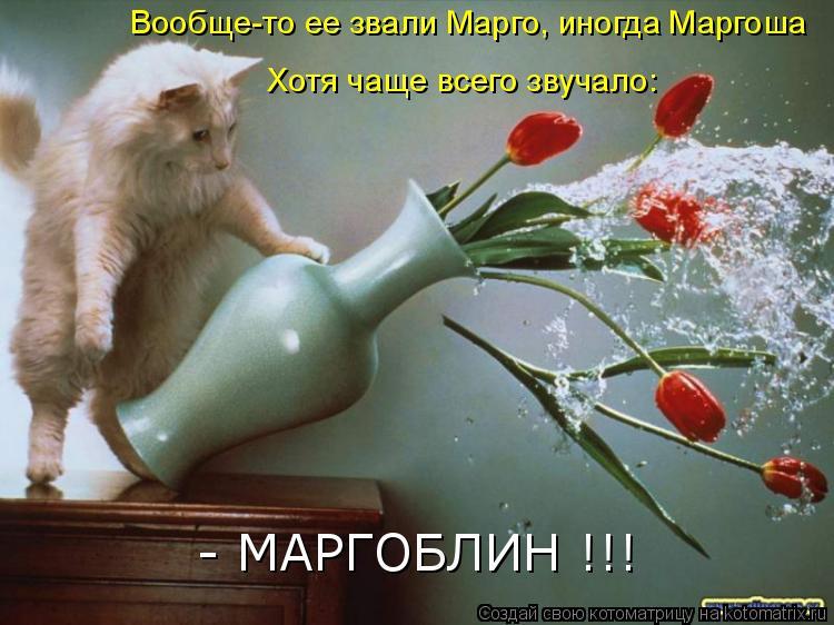 Котоматрица: Вообще-то ее звали Марго, иногда Маргоша Хотя чаще всего звучало: - МАРГОБЛИН !!!