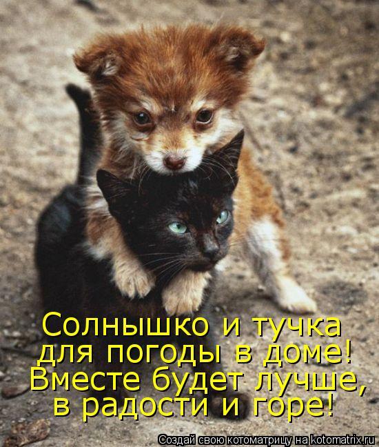Котоматрица: Солнышко и тучка  для погоды в доме!  Вместе будет лучше,  в радости и горе!