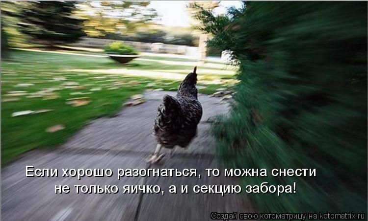 Котоматрица: Если хорошо разогнаться, то можна снести  не только яичко, а и секцию забора!