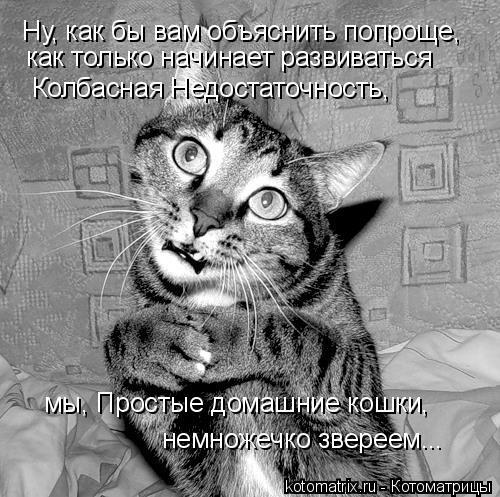 Котоматрица: Ну, как бы вам объяснить попроще, как только начинает развиваться  Колбасная Недостаточность, мы, Простые домашние кошки, немножечко зверее
