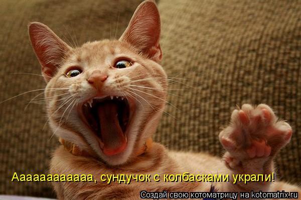 Котоматрица: Аааааааааааа, сундучок с колбасками украли!