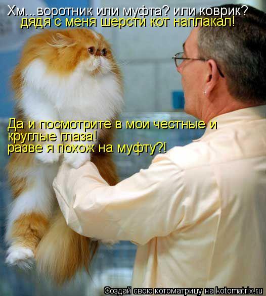 Котоматрица: Хм...воротник или муфта? или коврик? дядя с меня шерсти кот наплакал! Да и посмотрите в мои честные и  круглые глаза!   разве я похож на муфту?!