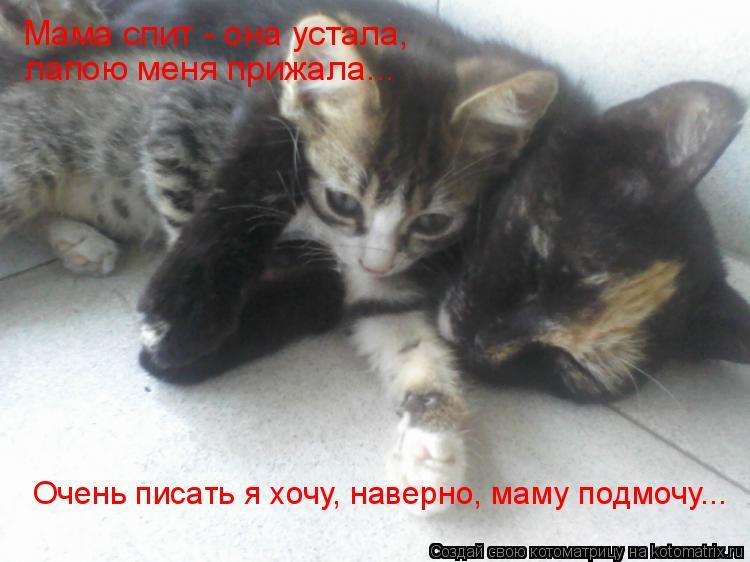 Котоматрица: Мама спит - она устала,  лапою меня прижала... Очень писать я хочу, наверно, маму подмочу...