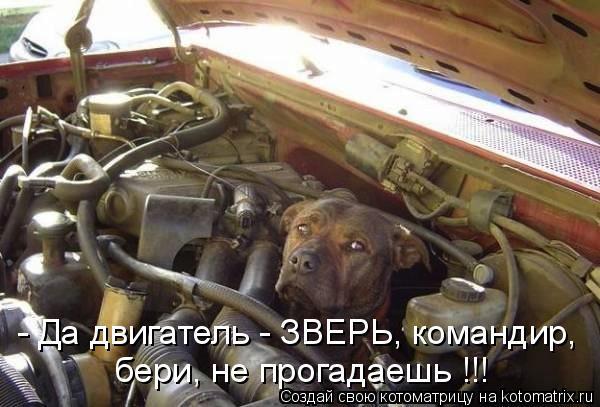 Котоматрица: - Да двигатель - ЗВЕРЬ, командир, бери, не прогадаешь !!!