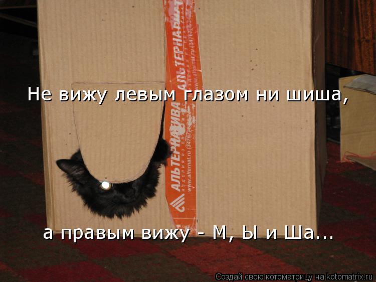 Котоматрица: Не вижу левым глазом ни шиша, а правым вижу - М, Ы и Ша...