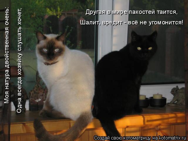 Котоматрица: Моя натура двойственная очень: Одна всегда хозяйку слушать хочет, Другая в мире пакостей таится, Шалит, вредит - всё не угомонится!