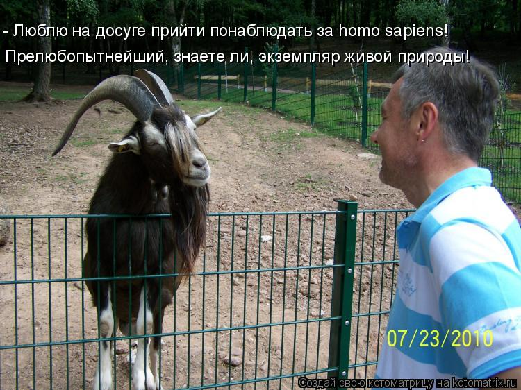 Котоматрица: Прелюбопытнейший, знаете ли, экземпляр живой природы! - Люблю на досуге прийти понаблюдать за homo sapiens!