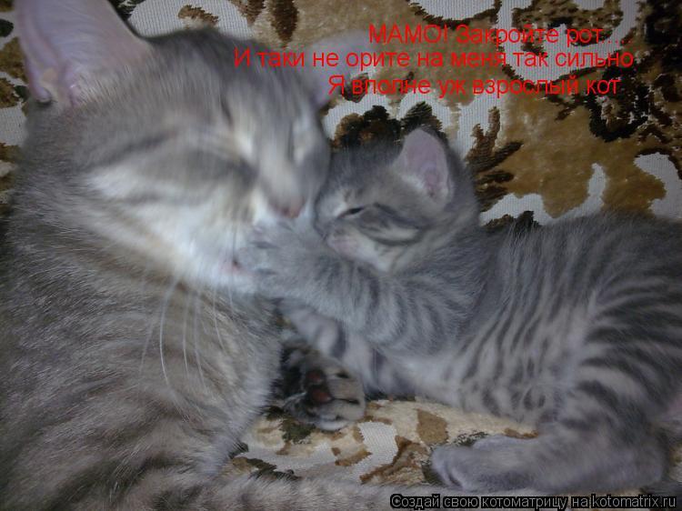 Котоматрица: МАМО! Закройте рот..... И таки не орите на меня так сильно Я вполне уж взрослый кот