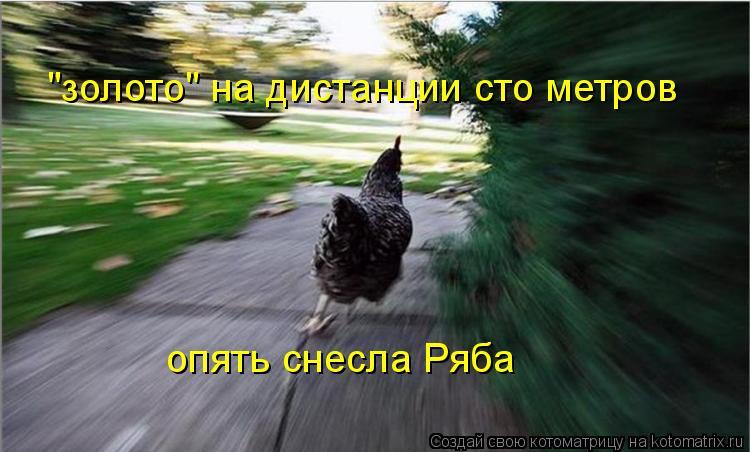 """Котоматрица: """"золото"""" на дистанции сто метров опять снесла Ряба"""