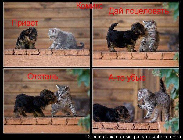 Котоматрица: Комикс Привет Дай поцеловать Отстань, А-то убью