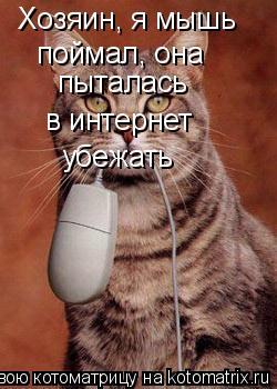 Котоматрица: Хозяин, я мышь  поймал, она пыталась в интернет убежать