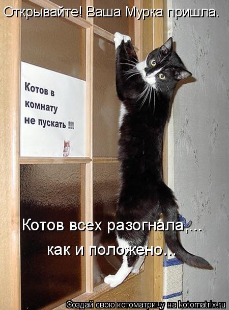 Котоматрица: Открывайте! Ваша Мурка пришла.  как и положено...   Котов всех разогнала,...