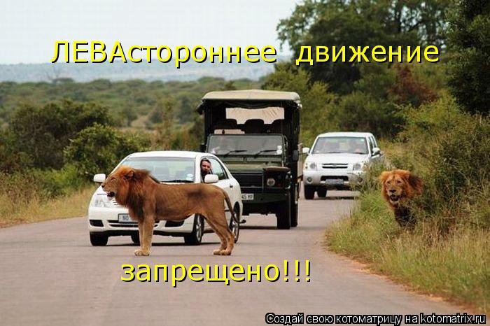 Котоматрица: ЛЕВАстороннее  движение запрещено!!!