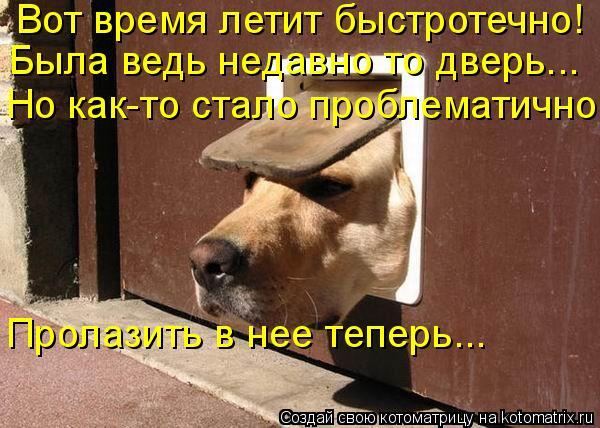 Котоматрица: Вот время летит быстротечно! Пролазить в нее теперь... Но как-то стало проблематично Была ведь недавно то дверь...