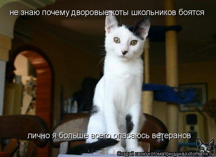 Котоматрица: не знаю почему дворовые коты школьников боятся лично я больше всего опасаюсь ветеранов
