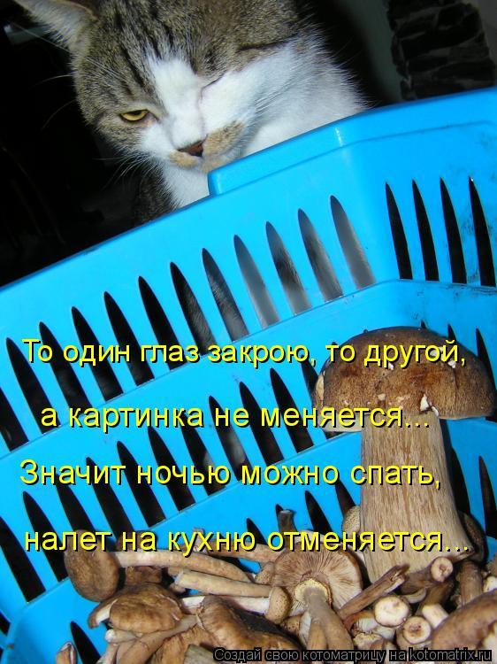 Котоматрица: То один глаз закрою, то другой,  налет на кухню отменяется...  Значит ночью можно спать,  а картинка не меняется...