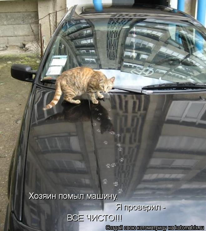 Котоматрица: Хозяин помыл машину. Я проверил - ВСЕ ЧИСТО!!!
