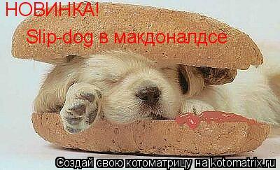 Котоматрица: НОВИНКА! Slip-dog в макдоналдсе