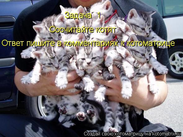 Котоматрица: Задача №1 Сосчитайте котят Ответ пишите в комментариях к котоматрице