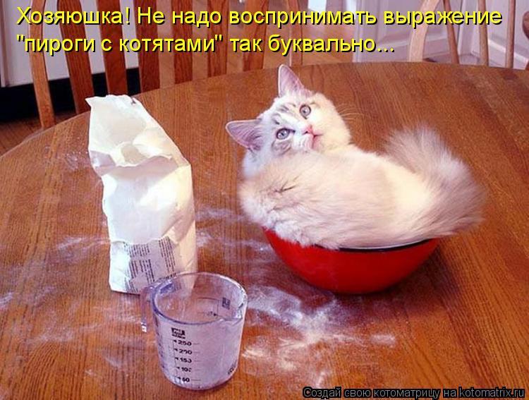 """Хозяюшка! Не надо воспринимать выражение """"пироги с котятами"""" так буква"""