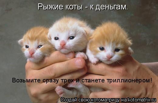 Котоматрица: Рыжие коты - к деньгам. Возьмите сразу трех и станете триллионером!