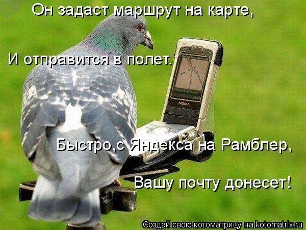 Котоматрица: Он задаст маршрут на карте, И отправится в полет. Быстро,с Яндекса на Рамблер, Вашу почту донесет!