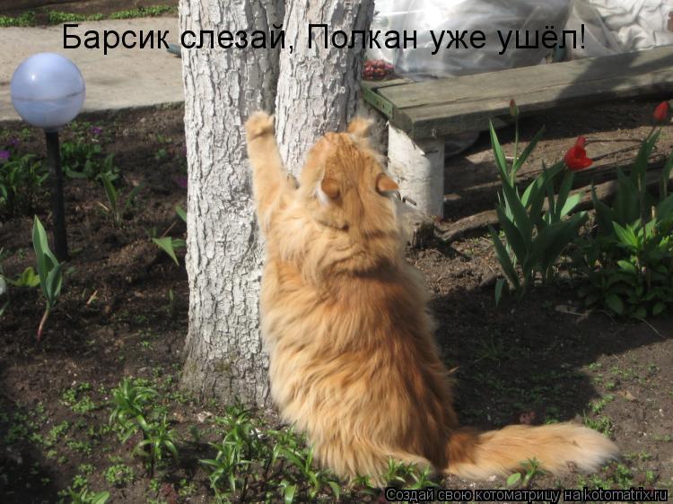 Котоматрица: Барсик слезай, Полкан уже ушёл!