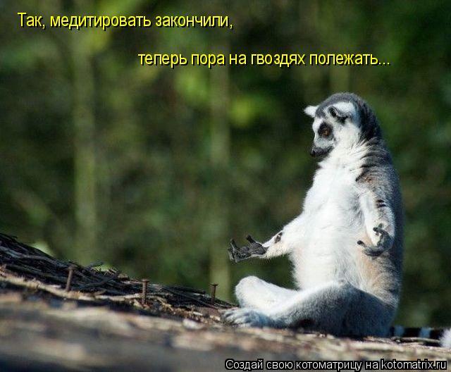 Котоматрица: Так, медитировать закончили, теперь пора на гвоздях полежать...