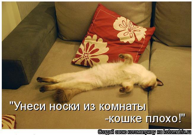 "Котоматрица: ""Унеси носки из комнаты -кошке плохо!"""