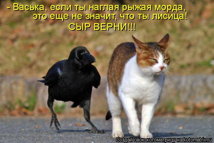 - Васька, если ты наглая рыжая морда,  это еще не значит, что ты лисица! СЫР ВЕРНИ!!!