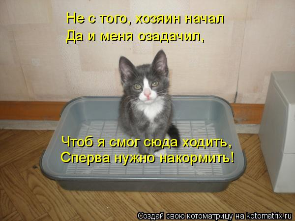 Котоматрица: Не с того, хозяин начал Да и меня озадачил, Чтоб я смог сюда ходить, Сперва нужно накормить!