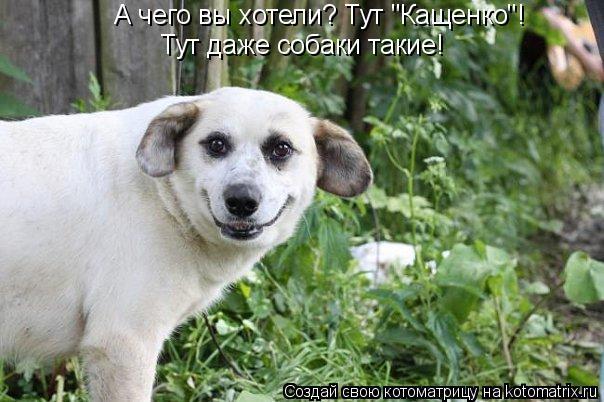 """Котоматрица: А чего вы хотели? Тут """"Кащенко""""! Тут даже собаки такие!"""