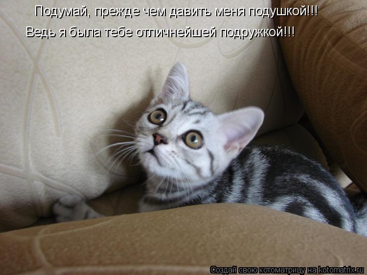 Котоматрица: Подумай, прежде чем давить меня подушкой!!! Ведь я была тебе отличнейшей подружкой!!!