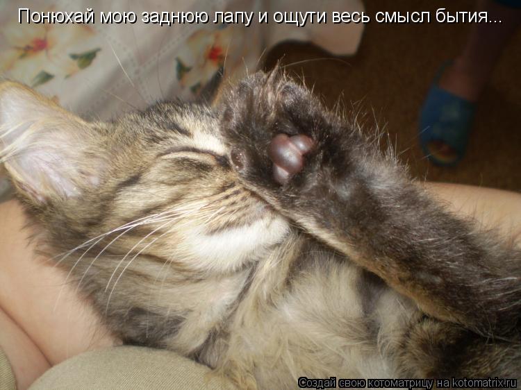Котоматрица: Понюхай мою заднюю лапу и ощути весь смысл бытия...
