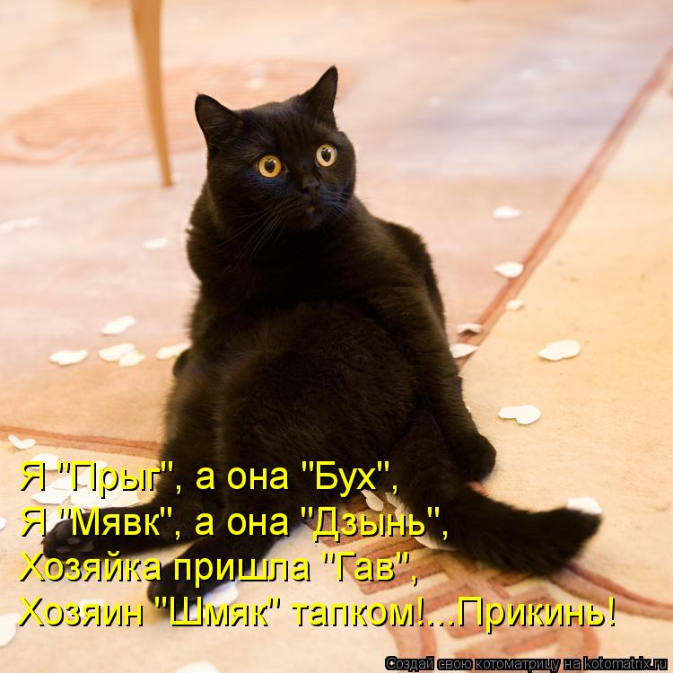 "Котоматрица: Я ""Прыг"", а она ""Бух"", Я ""Мявк"", а она ""Дзынь"", Хозяйка пришла ""Гав"", Хозяин ""Шмяк"" тапком!...Прикинь!"