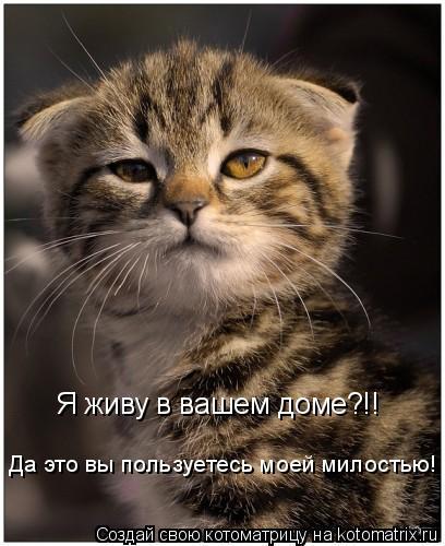 Я живу в вашем доме?!! Да это вы пользуетесь моей милостью!