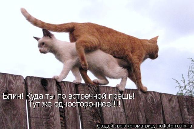 http://kotomatrix.ru/images/lolz/2010/08/24/661138.jpg