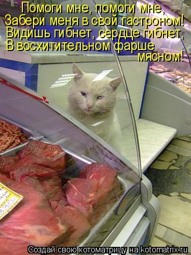 Котоматрица: Помоги мне, помоги мне, Забери меня в свой гастроном! Видишь гибнет, сердце гибнет, В восхитительном фарше  мясном!