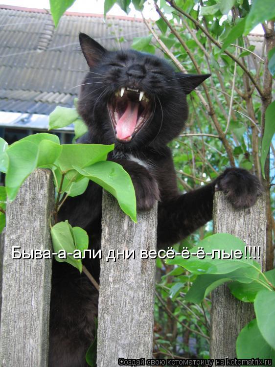 Котоматрица: Быва-а-али дни весё-ё-ё-лые!!!!