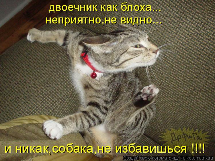 Котоматрица: двоечник как блоха... неприятно,не видно... и никак,собака,не избавишься !!!!