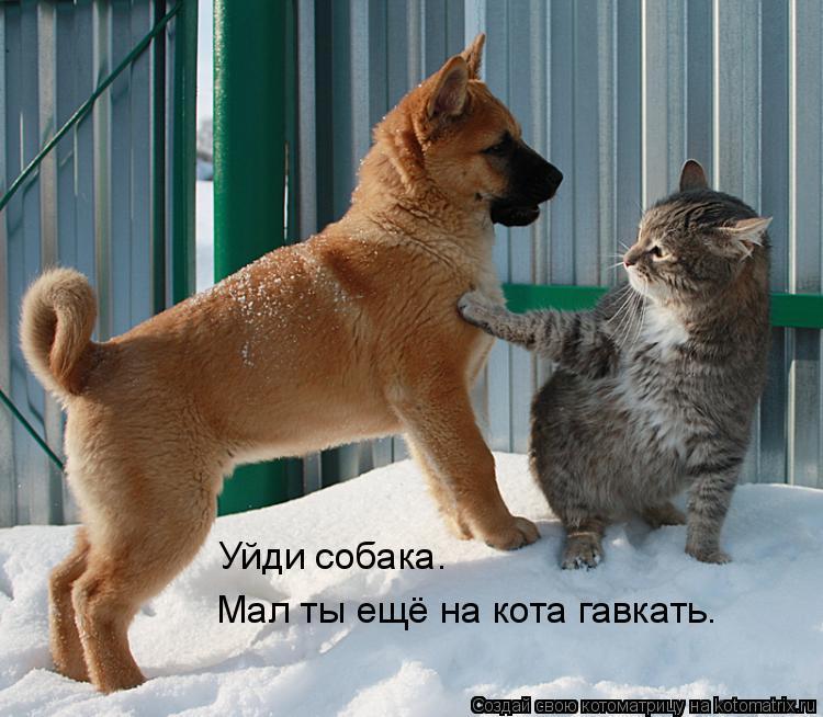 Котоматрица: Уйди собака. Мал ты ещё на кота гавкать.